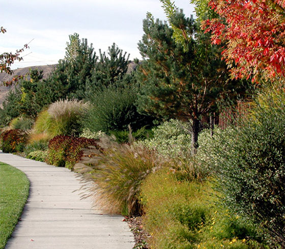 Neighborhood sidewalk residential landscape design
