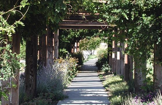 Walkway arbor