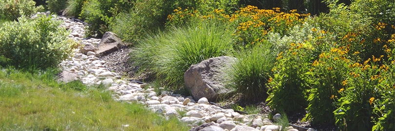 Natural Landscape architecture simulating a creek bed surrounded by green plants