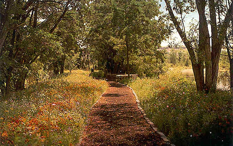 Path surrounded by wildflowers and trees.