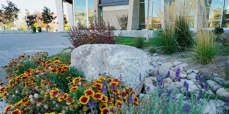 Library entrance with boulders and flowers