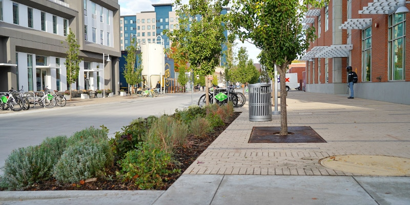 Broad street sidewalk with flowerbeds and trees