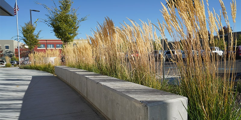 Tall grasses behind concrete bench