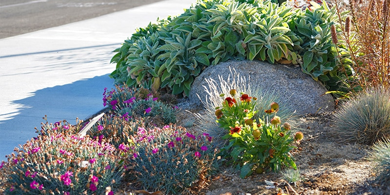 Closeup of flowers and bushes.